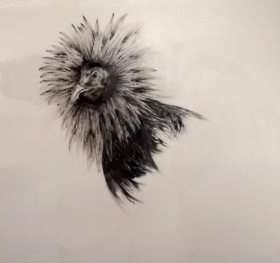 Pollo-Marcel Sánchez-Autogiro arte actual
