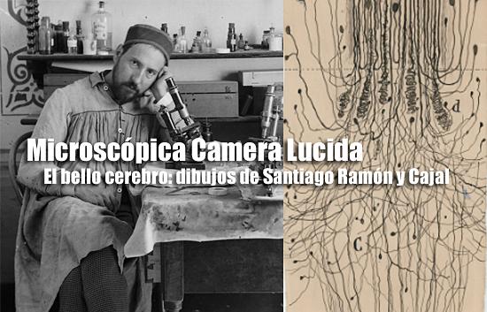 El bello cerebro: dibujos de Santiago Ramón y Cajal